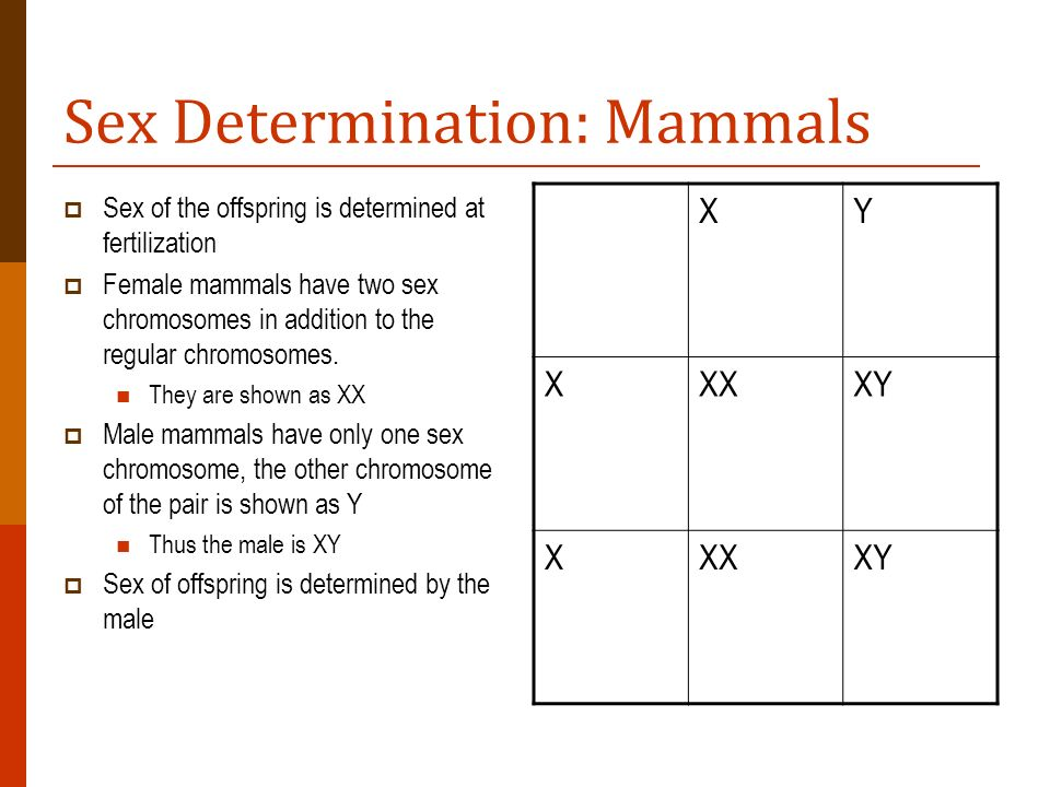 Sex Determination: Mammals