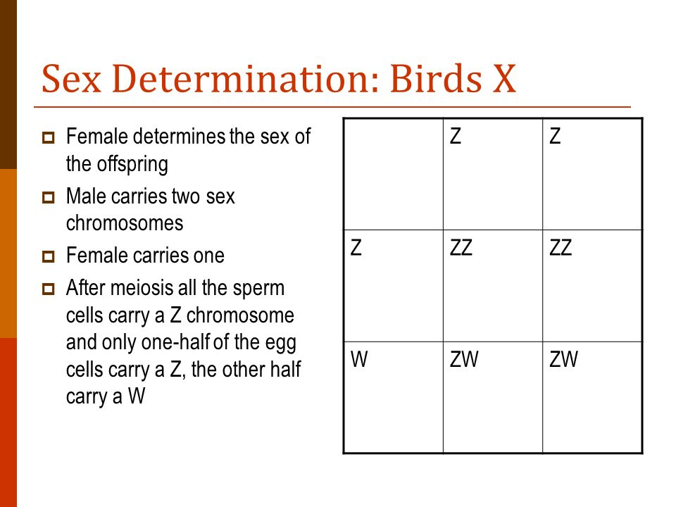 Sex Determination: Birds X