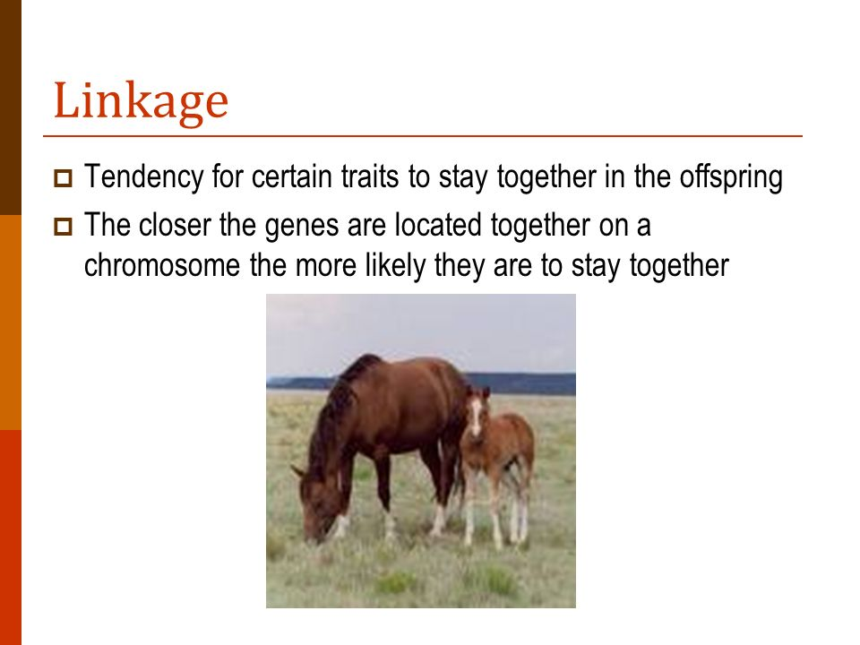 Linkage Tendency for certain traits to stay together in the offspring