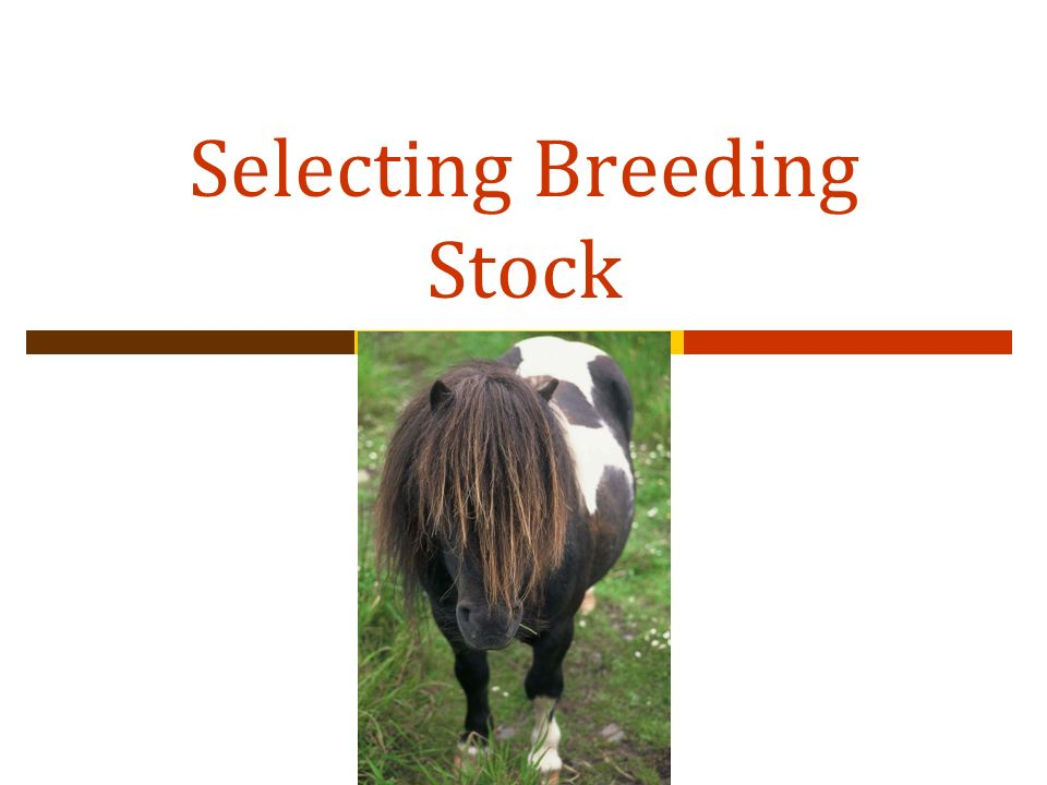 Selecting Breeding Stock