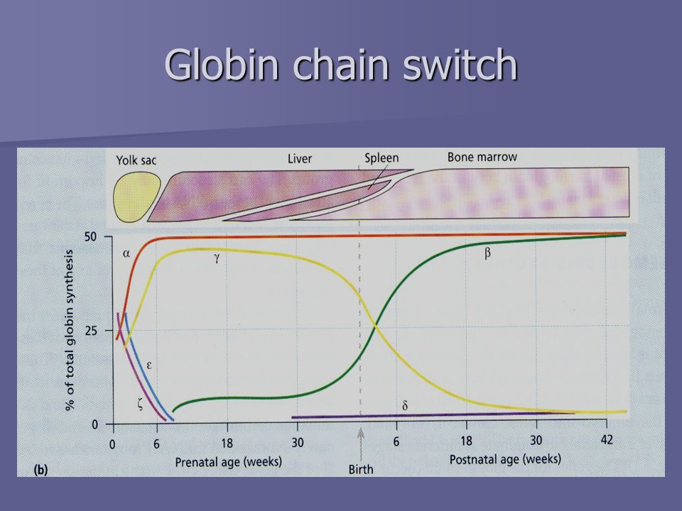Globin chain switch