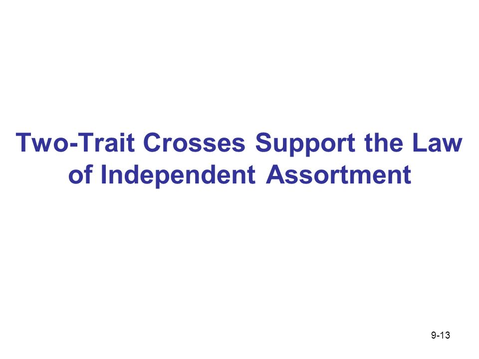 Two-Trait Crosses Support the Law of Independent Assortment