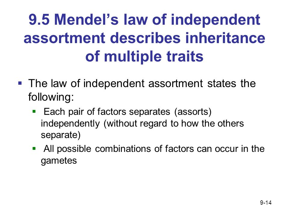 9.5 Mendel's law of independent assortment describes inheritance of multiple traits