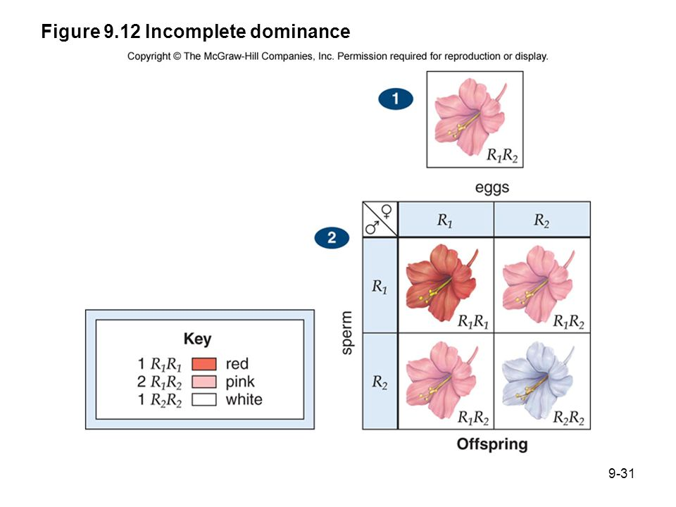 Figure 9.12 Incomplete dominance