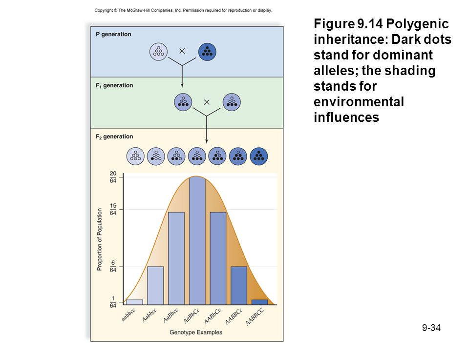 Figure 9.14 Polygenic inheritance: Dark dots stand for dominant alleles; the shading stands for environmental influences