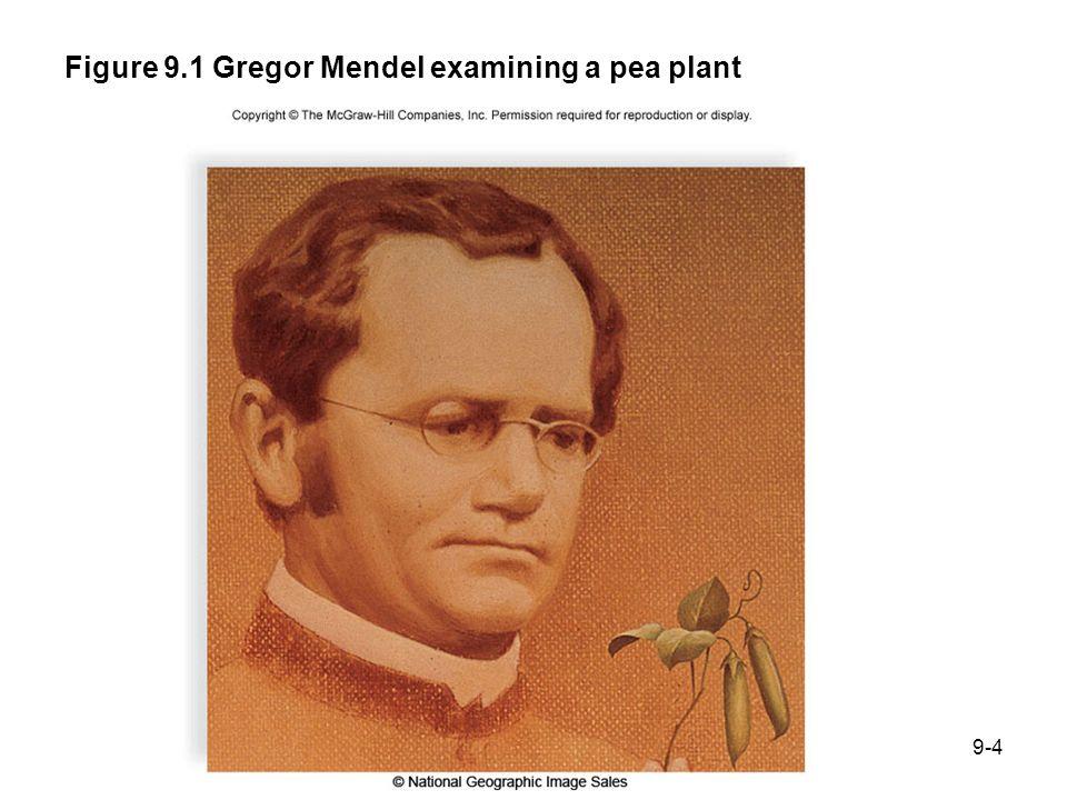 Figure 9.1 Gregor Mendel examining a pea plant