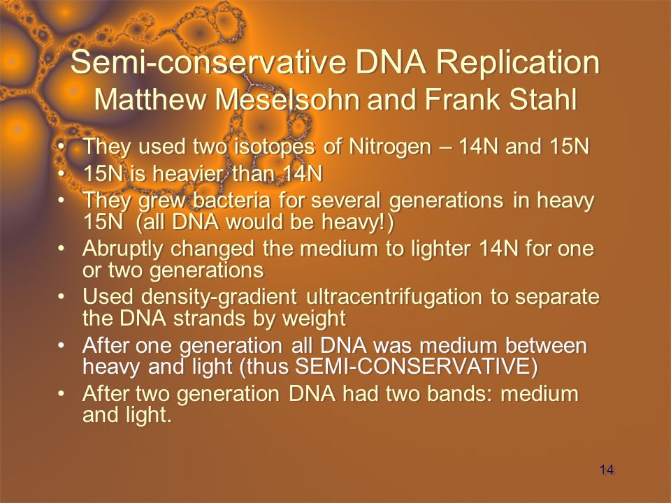 Semi-conservative DNA Replication Matthew Meselsohn and Frank Stahl