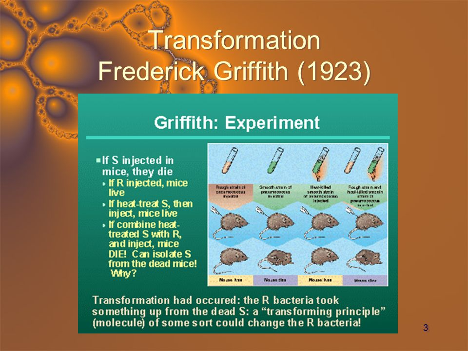 Transformation Frederick Griffith (1923)