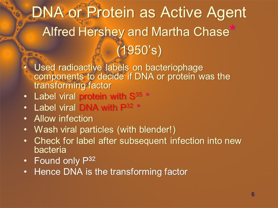 DNA or Protein as Active Agent Alfred Hershey and Martha Chase