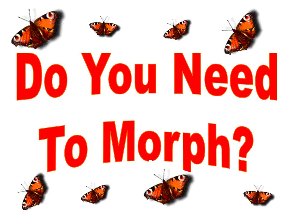 Do You Need To Morph