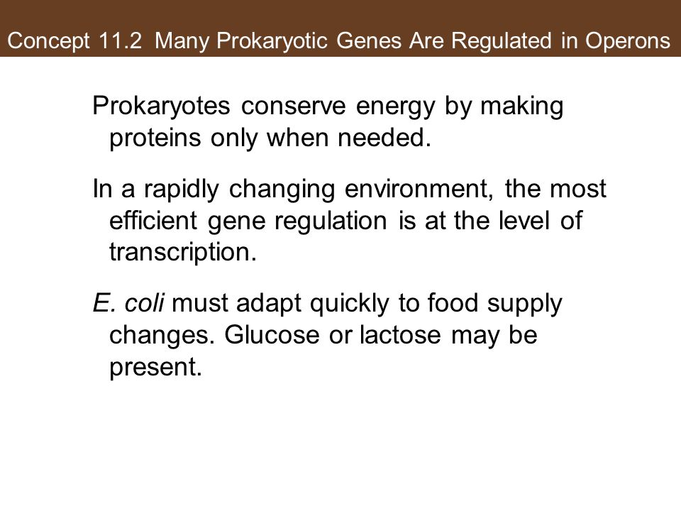 Concept 11.2 Many Prokaryotic Genes Are Regulated in Operons