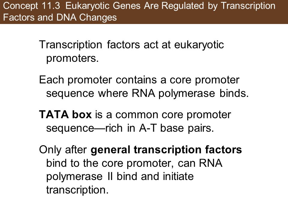 Transcription factors act at eukaryotic promoters.
