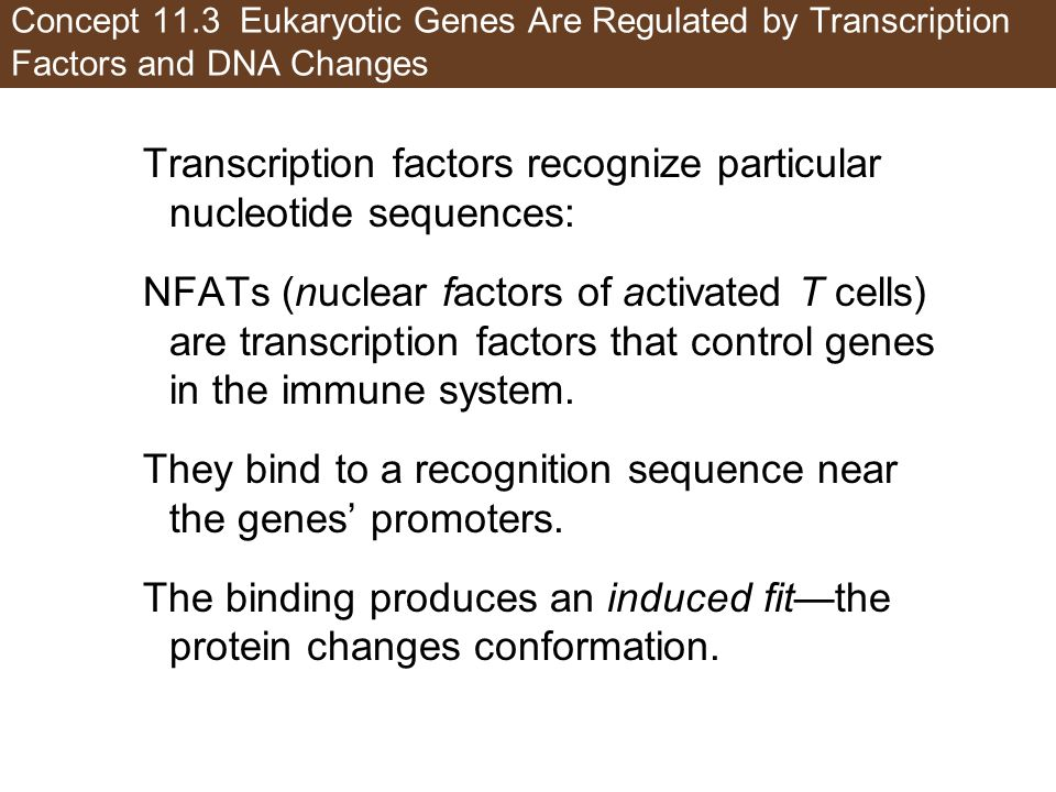 Transcription factors recognize particular nucleotide sequences: