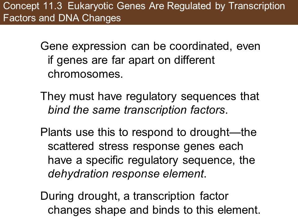 Concept 11.3 Eukaryotic Genes Are Regulated by Transcription Factors and DNA Changes