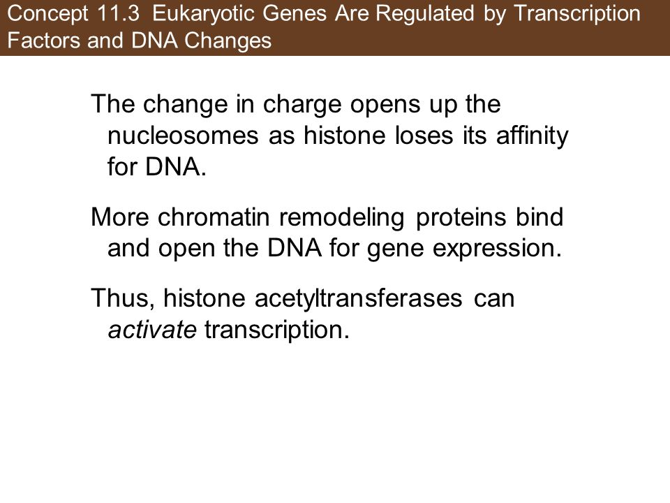 Thus, histone acetyltransferases can activate transcription.
