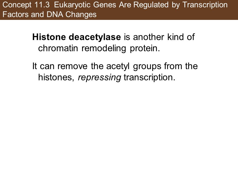 Histone deacetylase is another kind of chromatin remodeling protein.