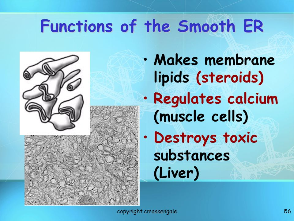 Functions of the Smooth ER