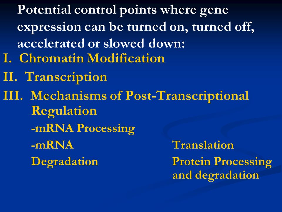 I. Chromatin Modification II. Transcription