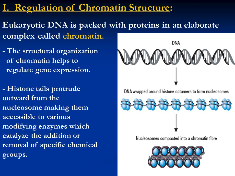 I. Regulation of Chromatin Structure: