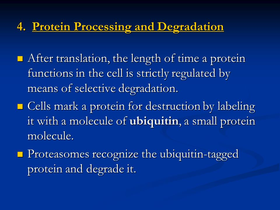 4. Protein Processing and Degradation
