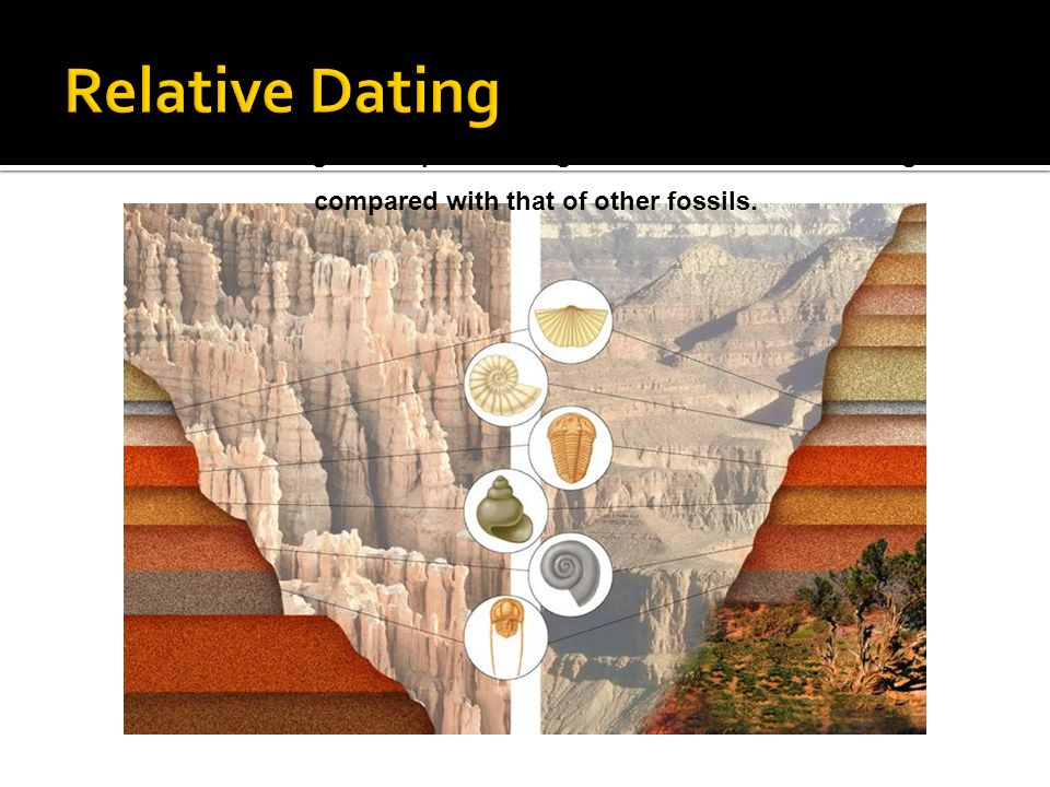 Relative Dating Relative dating allows paleontologists to estimate a fossil s age.