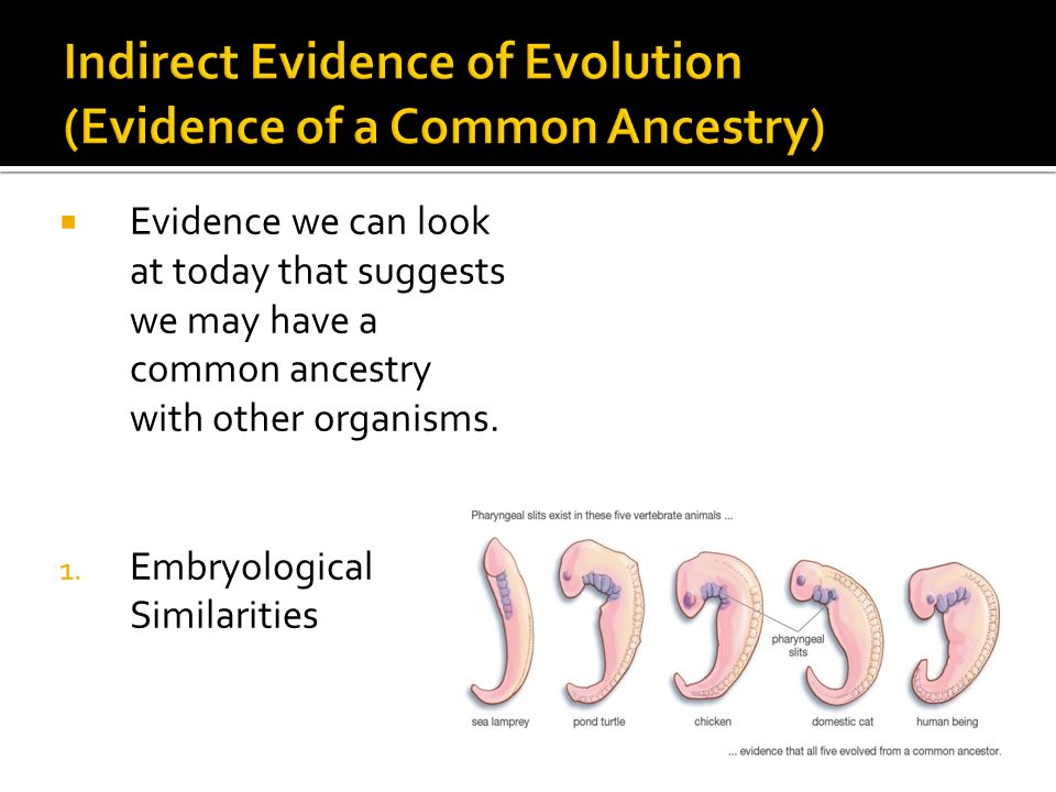 Indirect Evidence of Evolution (Evidence of a Common Ancestry)