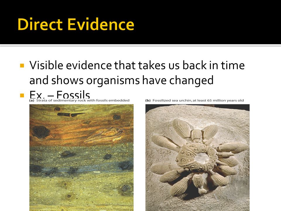 Direct Evidence Visible evidence that takes us back in time and shows organisms have changed.