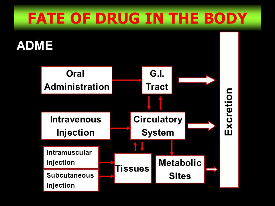FATE OF DRUG IN THE BODY ADME Excretion Oral Administration G.I. Tract