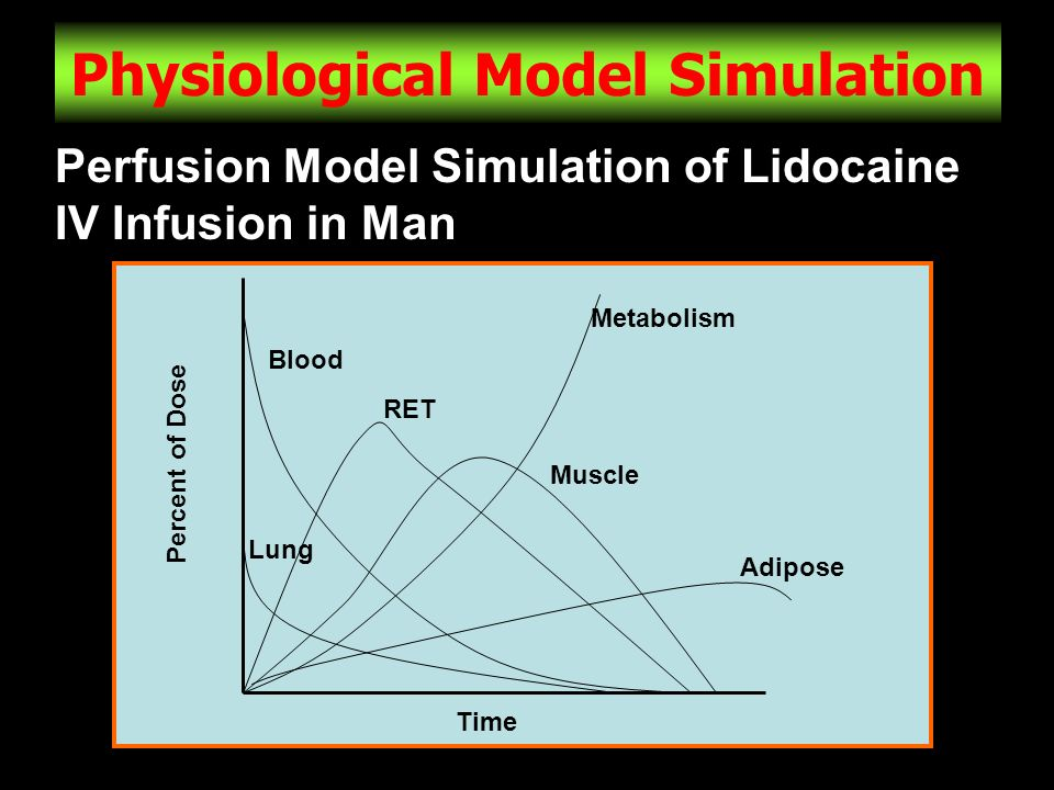 Physiological Model Simulation