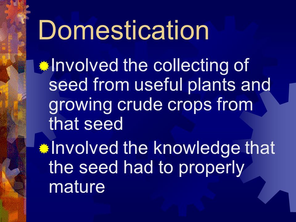 Domestication Involved the collecting of seed from useful plants and growing crude crops from that seed.