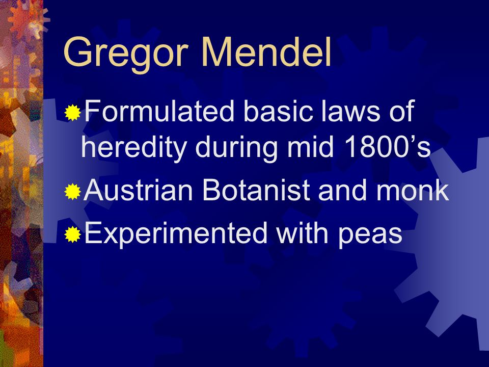 Gregor Mendel Formulated basic laws of heredity during mid 1800's