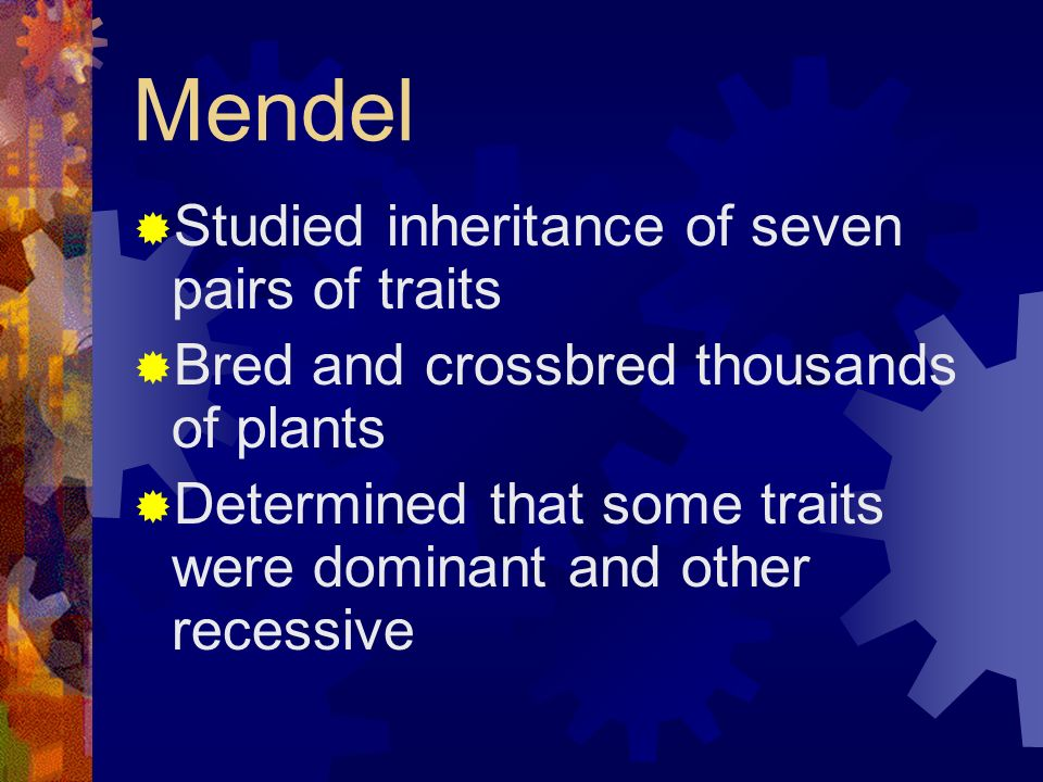 Mendel Studied inheritance of seven pairs of traits