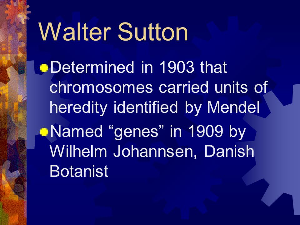 Walter Sutton Determined in 1903 that chromosomes carried units of heredity identified by Mendel.