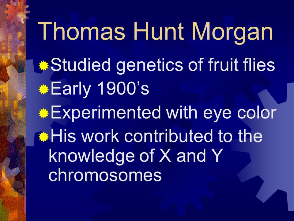 Thomas Hunt Morgan Studied genetics of fruit flies Early 1900's