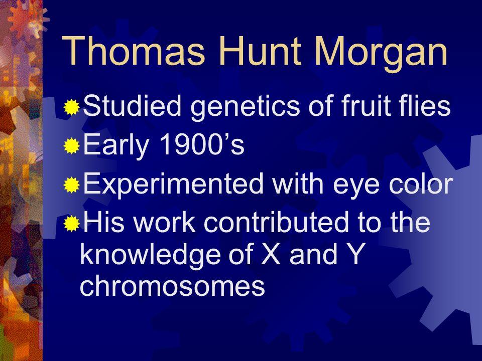 Thomas Hunt Morgan Studied genetics of fruit flies Early 1900's