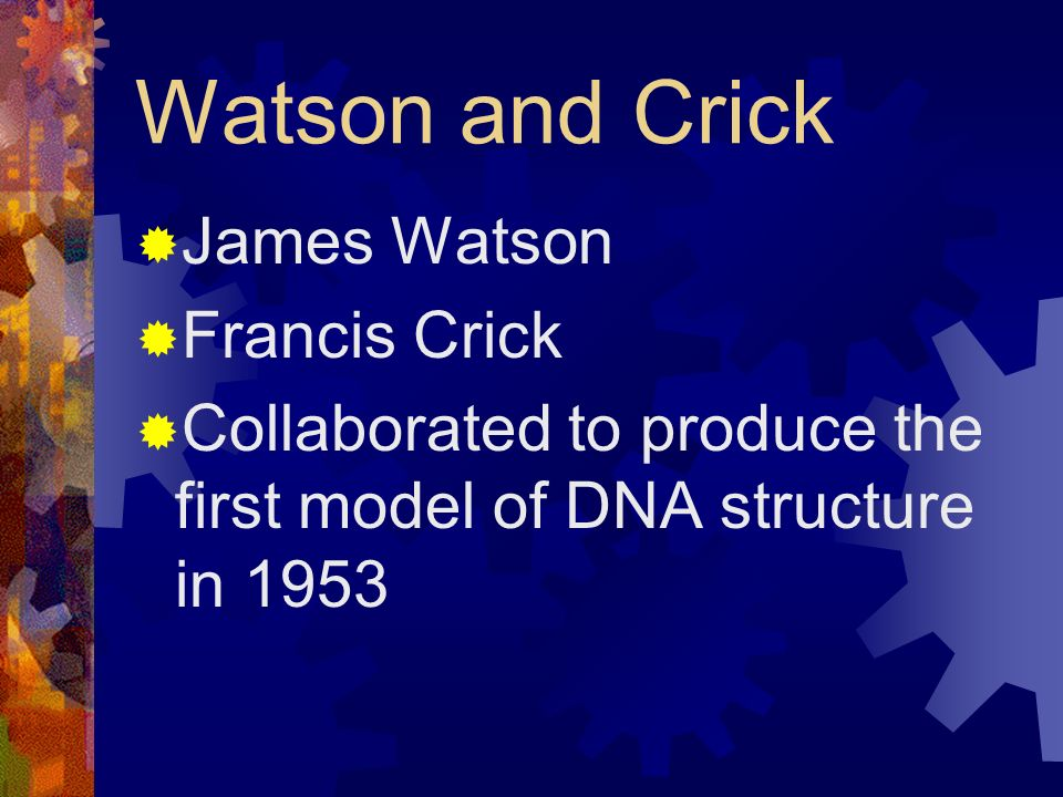 Watson and Crick James Watson Francis Crick