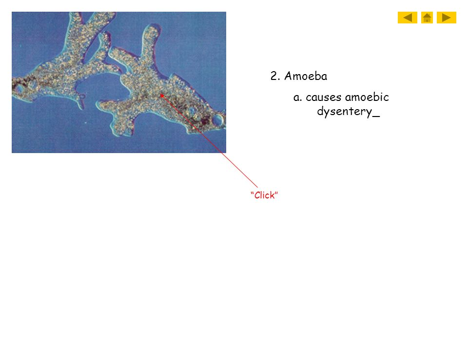 a. causes amoebic dysentery_