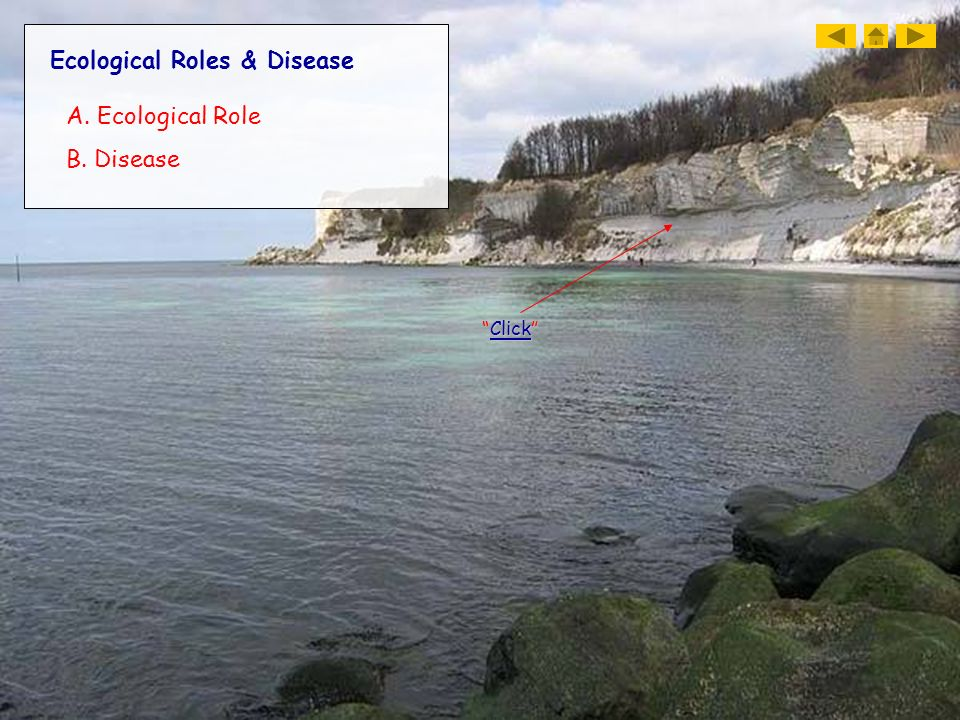 Ecological Roles & Disease