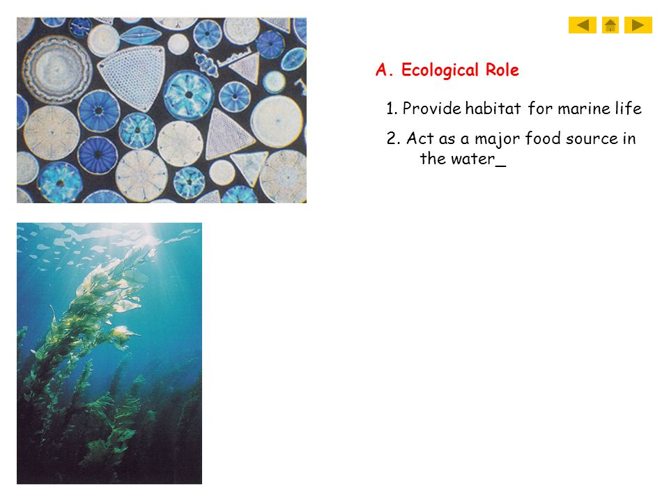 A. Ecological Role 1. Provide habitat for marine life 2. Act as a major food source in the water_
