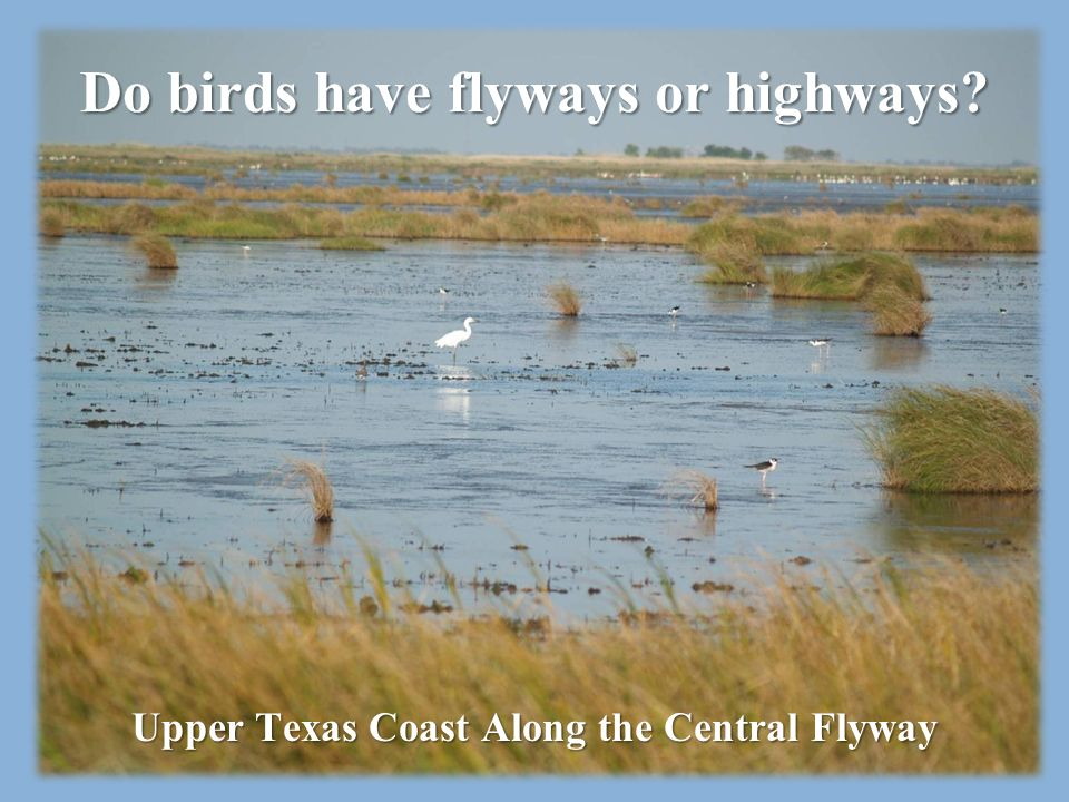 Do birds have flyways or highways