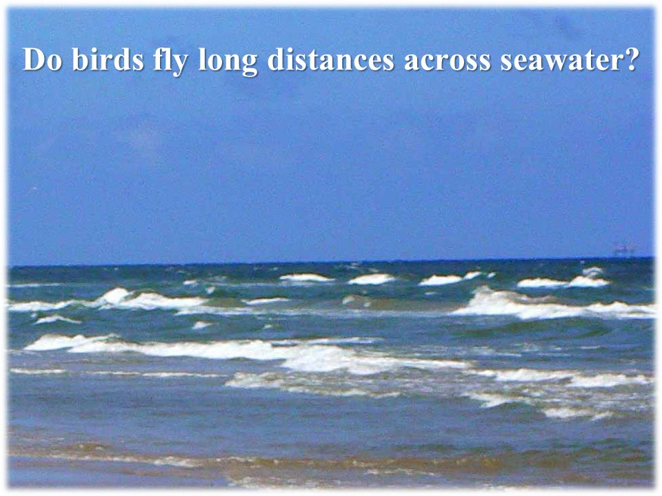 Do birds fly long distances across seawater