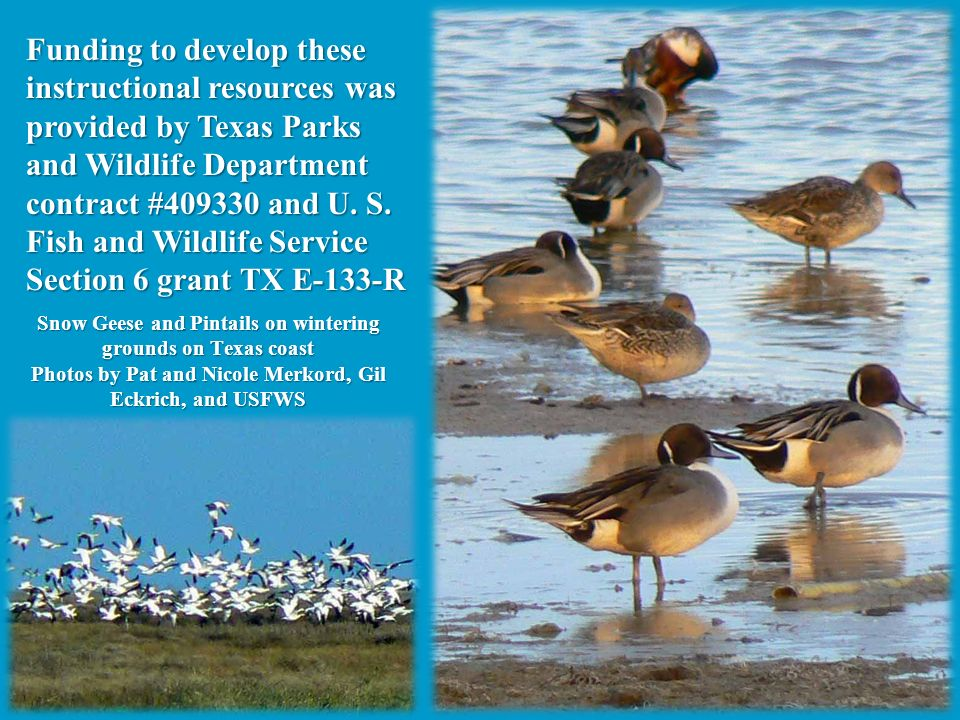 Funding to develop these instructional resources was provided by Texas Parks and Wildlife Department contract #409330 and U. S. Fish and Wildlife Service Section 6 grant TX E-133-R