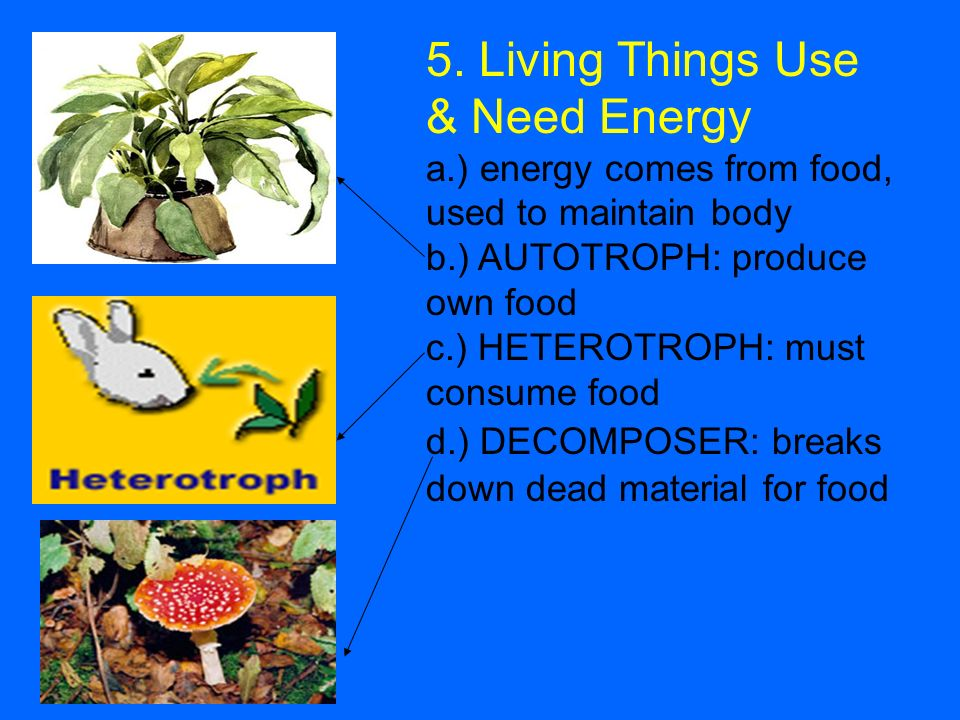 5. Living Things Use & Need Energy a