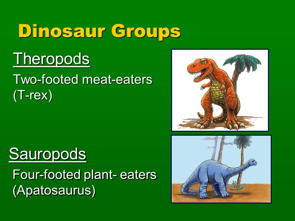 Dinosaur Groups Theropods Sauropods Two-footed meat-eaters (T-rex)