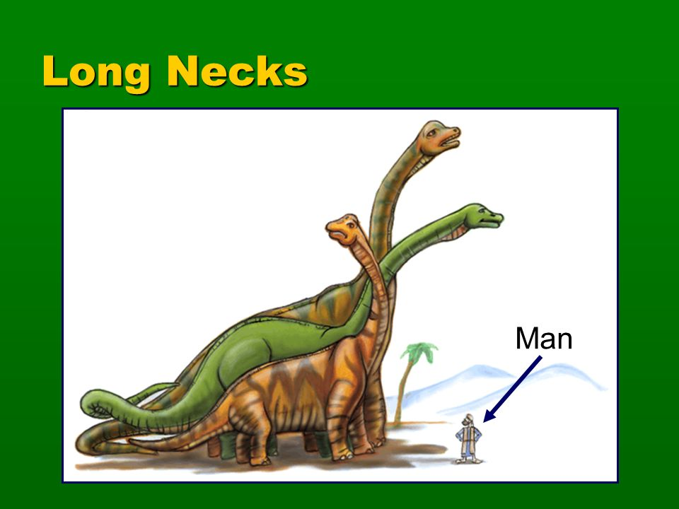 Long Necks Ultrasaurus Supersaurus Brachiosaurus Sauropods Man