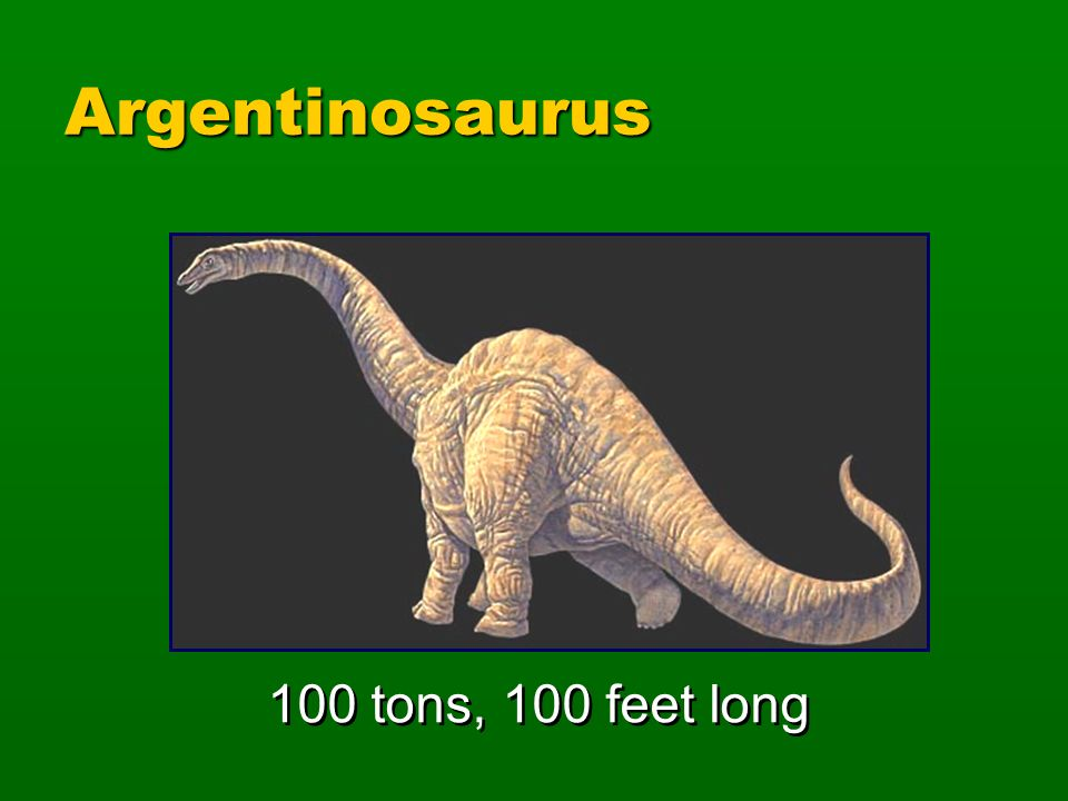 Argentinosaurus 100 tons, 100 feet long