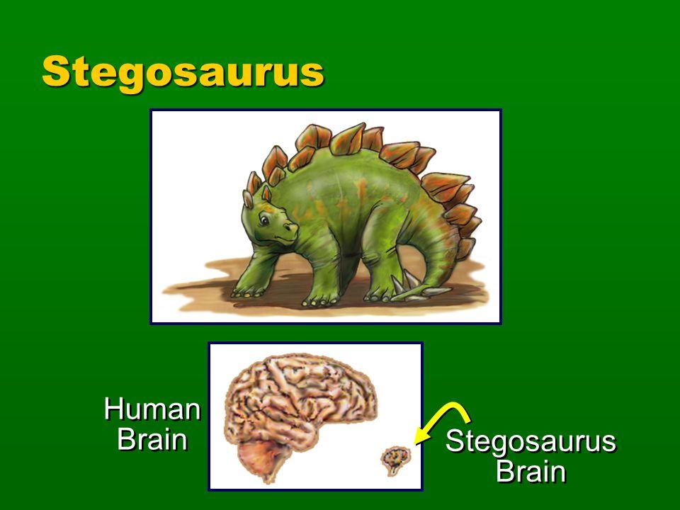 Stegosaurus Human Brain Stegosaurus Brain