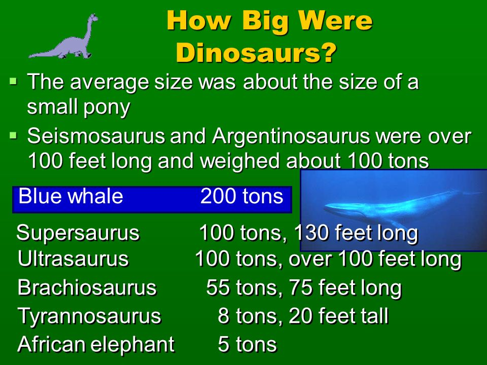 How Big Were Dinosaurs The average size was about the size of a small pony.