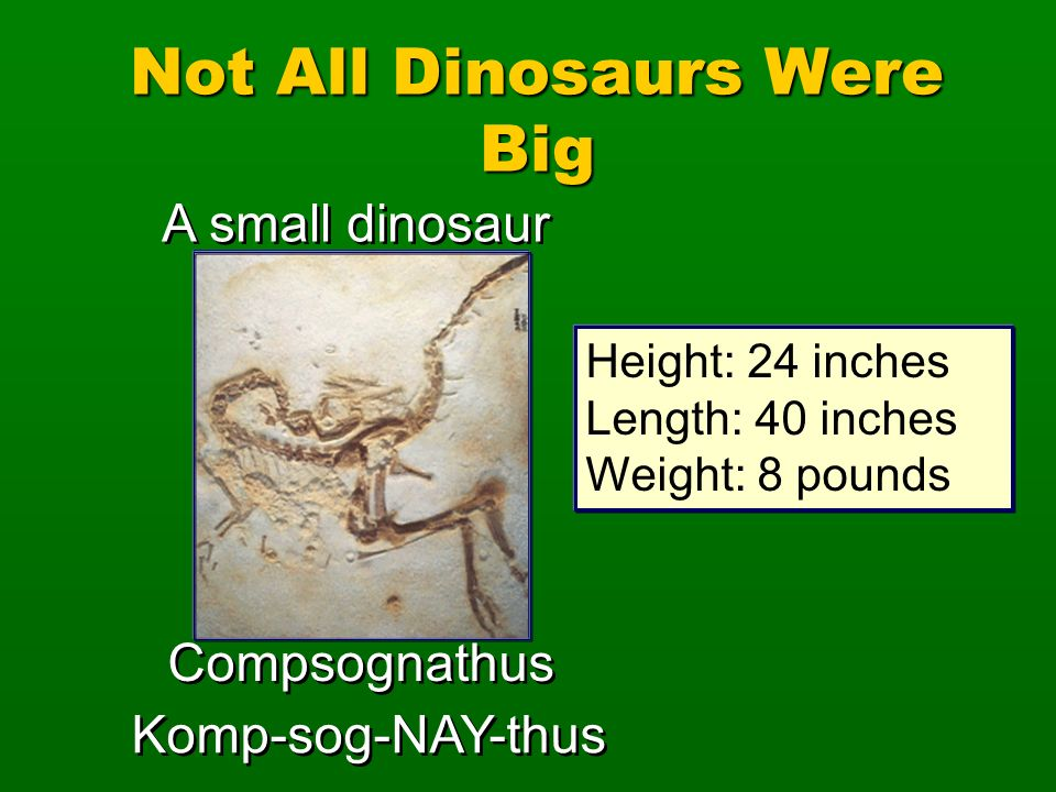 Not All Dinosaurs Were Big