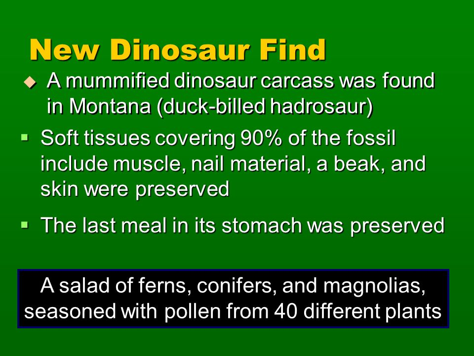 New Dinosaur Find A mummified dinosaur carcass was found in Montana (duck-billed hadrosaur)